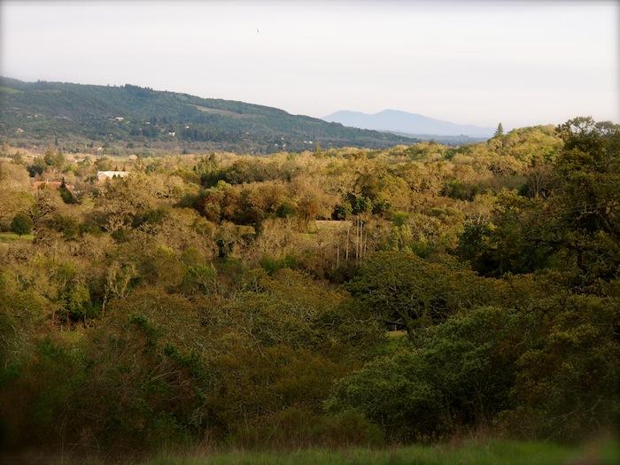 sonoma mountain sonoma developmental center SDC