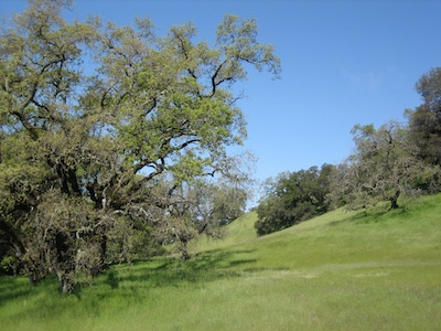 open space preservation sonoma mountain