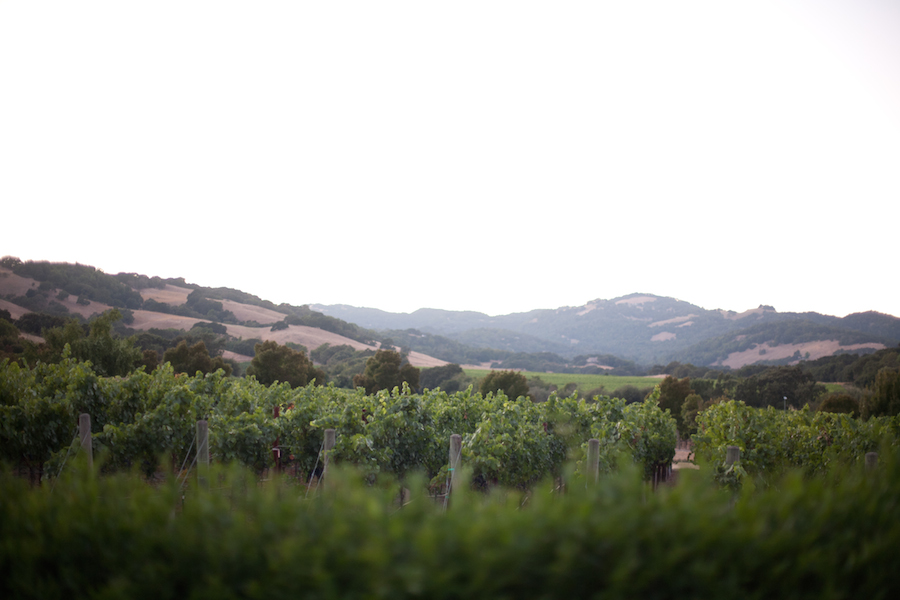 Your Sonoma Valley Sonoma Mountain Preservation