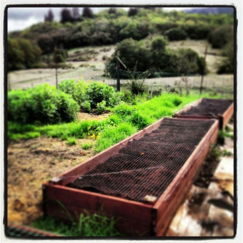 two moon family farm raised beds sonoma mountain preservation